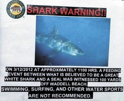 california-shark-attack-warning
