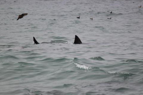 Yep, That's a Shark